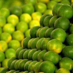 Image result for punjab mosami farm