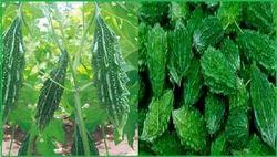 Unnat Seeds Hybrid Vegetable Seeds, Pack Size: 10 Gm