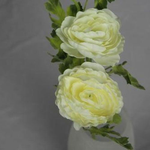 White ranunculus flower at rs 140 piece wazirpur industrial area white ranunculus flower mightylinksfo