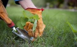 Weed Management Service