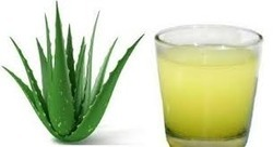Aloe Vera Juice Testing Services