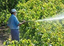 Garden Pest Control in India