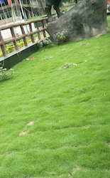Landscaping Services Garden Decorators