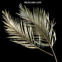 Mexicana Leaf