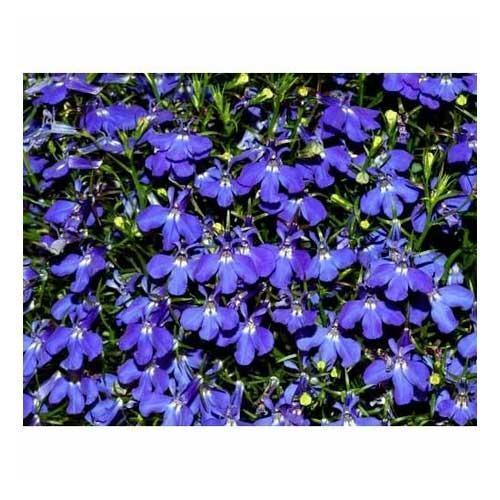 Green Heaven Lobelia Extract Pack Size 5 Kg Packaging Type
