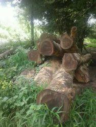 Kini And Shiras Timbers
