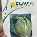 Clause Nilgiri Cabbage Seeds