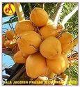 Coconut Carrier Oil
