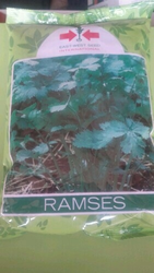 Ramsees Seeds
