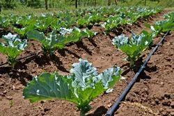 Inline Drip Irrigation System