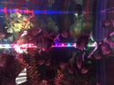 Vido Tetra Fish