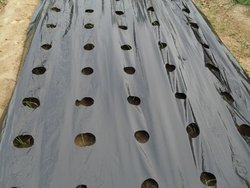 LDPE Mulch Film