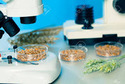 Food Quality Testing Services