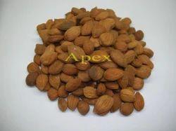 Apricot Kernel, Packaging Size: 20 kg