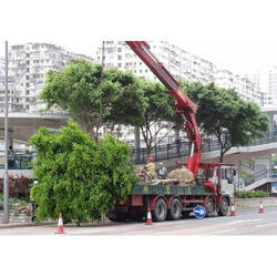 Tree Transplanting Services in India