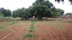 Commercial Developed Company Farm Land 300acre, Tamilnadu