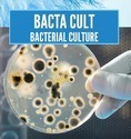 Bacteria Culture For Sewage Treatment Plant