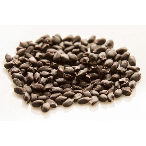 Basil Seed At Rs 150 Kilogram Basil Seeds P N H