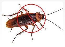 Cockroaches And Ants Pest Control Service