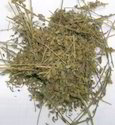 Convolvulus Pluricaulis Herbs