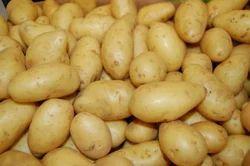 Brown B Grade Potato, Packaging Size: 50 kg
