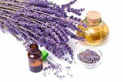 Lavender Terpenes Essential Oils