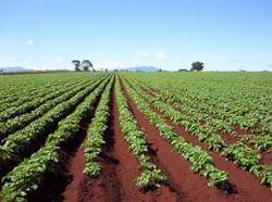 Farm Development Consultancy