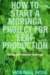 How To Start Moringa Project For Leaf Production