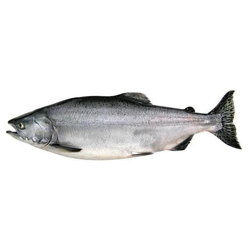 Salmon Fish - Wholesale Price & Mandi Rate for Salmon Fish