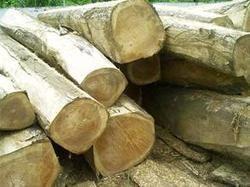 Australian honne wood price in bangalore dating 3