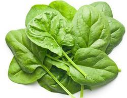 Canned Leaf Spinach