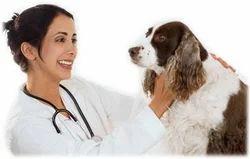 Dog Deworming Treatment Service