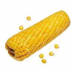 Boiled Sweet Corn on Cob
