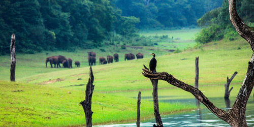 Image result for wonders of kerala images