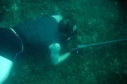 Spear Fishing Tour Package