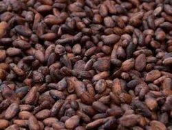 Coco Beans