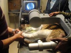 Dog Fracture Operation