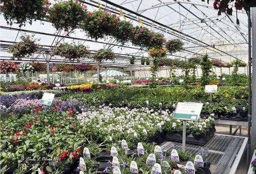 Plant Nursery Service