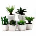 Artificial Cactus Plants
