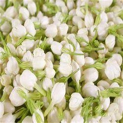 Jasmine Flower Exporter from Tirunelveli