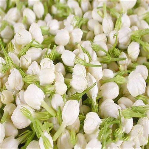 jasmine flower at rs 1400 kilogram jasminum sambac mogara