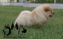 Dog Training Service And Dogs Available