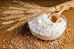 Wheat Flour, for Breads