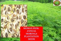 MPKM True-to-Tpe Moringa PKM 1 Seeds Elite Variety, Pack Size: 5 and 10 kg