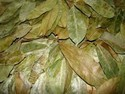 Dry Soursop Leaves
