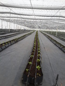 Soilless Cultivation Service