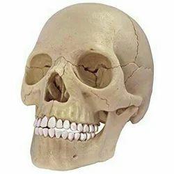 Skeleton Khopdi