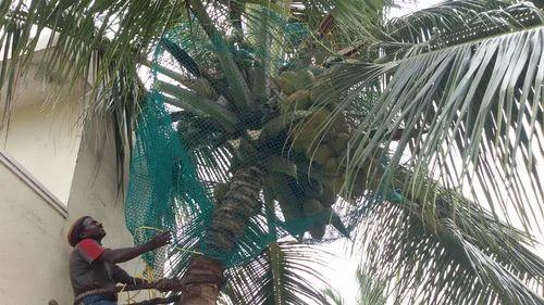 Coconut Tree Safety Net Ramana Enterprises Service