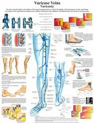 Anatomy & Physiology Charts
