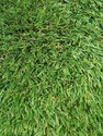 PVC Grass Carpet